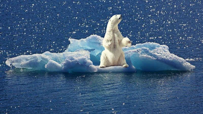 Movimenti per il clima